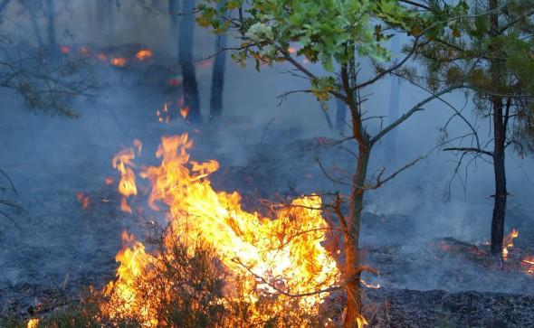 Waldbrand-Bodenfeuer